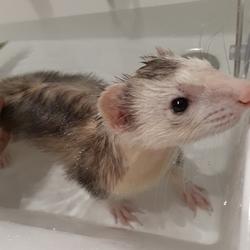 「入浴」サムネイル1