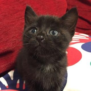可愛い黒猫ちゃんの家族を探しています。