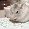 ネズミちゃんと!