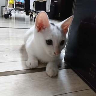 4ヵ月の子猫です