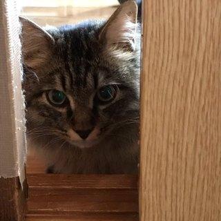 ふわふわの猫です