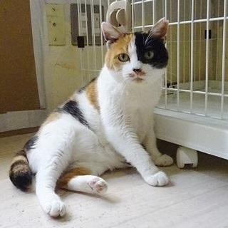 おだやかな性格の三毛猫♡窓辺が大好きです