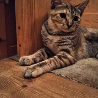 スレンダー美猫 麦わらちゃん