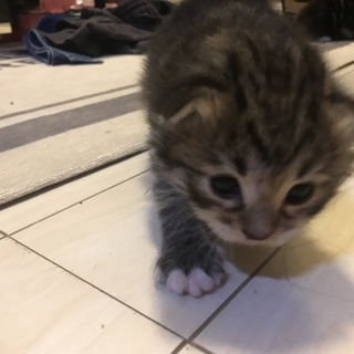 子猫の里親になってくださる方探しています。