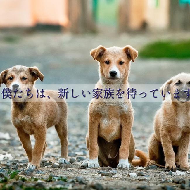 animalprotection.kagawaのカバー写真