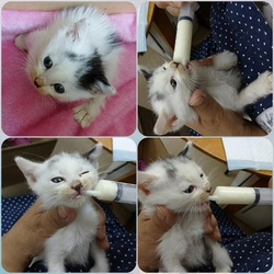 「夏生まれの子猫、緊急保護!」サムネイル1
