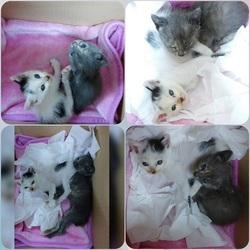「夏生まれの子猫、緊急保護!」サムネイル3