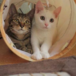 可愛い子猫里親様募集です