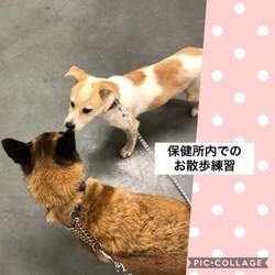 保護犬うづきちゃん
