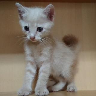 可愛い子猫3兄弟里の里親様募集です!