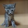 可愛い子猫3兄弟里の里親様募集です! サムネイル3