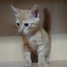 可愛い子猫3兄弟里の里親様募集です! サムネイル2