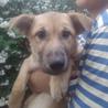 9月22日に愛知県蒲郡市で犬猫の譲渡会