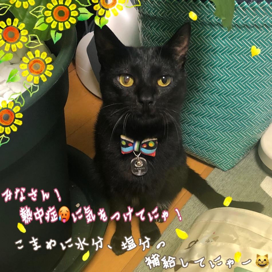 和賀井 優子のカバー写真