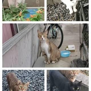 みなしごになった猫たち 預かり先、里親募集