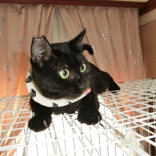 性格の優しい黒猫ちゃんです。