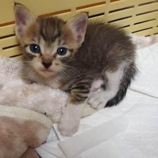 動物病院発! ちんまり可愛い男の子 ハンデあり