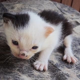 赤ちゃん猫!