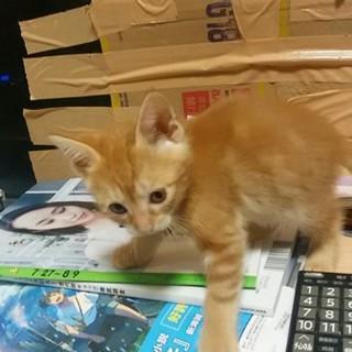 子猫(1か月弱)の里親様募集します。