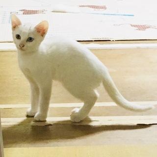 おてんばな白い美猫♥️