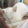 おてんばな白い美猫♥️ サムネイル2