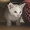 おてんばな白い美猫♥️ サムネイル3