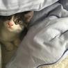 子猫のレオ君 里親になってください