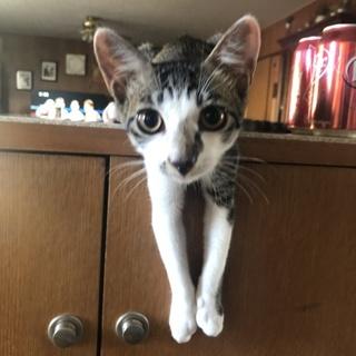 保護猫です。どうか家族に迎えて下さい。