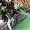 保護猫です。どうか家族に迎えて下さい。 サムネイル3