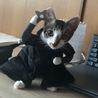 保護猫です。どうか家族に迎えて下さい。 サムネイル4