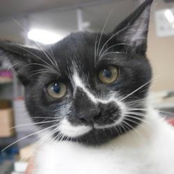 大阪あべの 保護猫のゆる~い譲渡会 サムネイル2