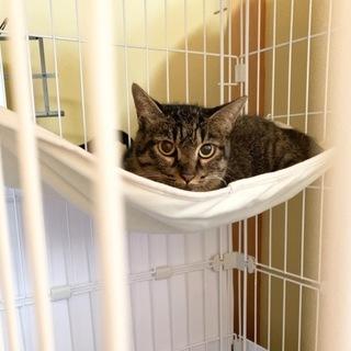 捨てられた元飼い猫ママのリリーちゃん