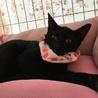 利口な黒猫チョコちゃん4ヶ月