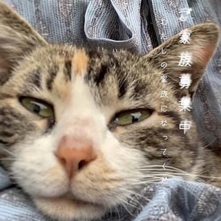 可愛くて優しい甘えん坊のミケ猫ちゃん