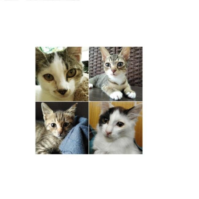 cat Friendのカバー写真