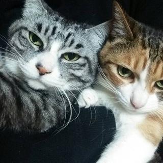 急募!老猫兄妹です。
