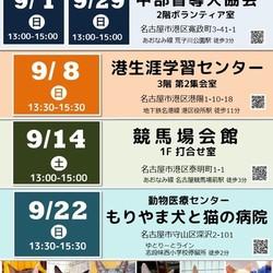 ▼猫の譲渡会▼名古屋市港区 サムネイル3