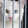 オッドアイの綺麗な猫さんです♪