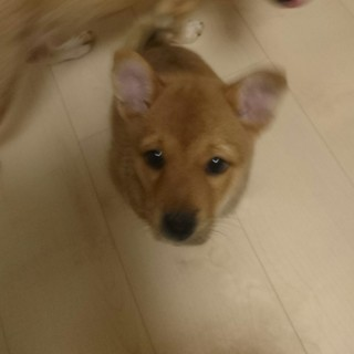 子犬ちゃん3ヶ月