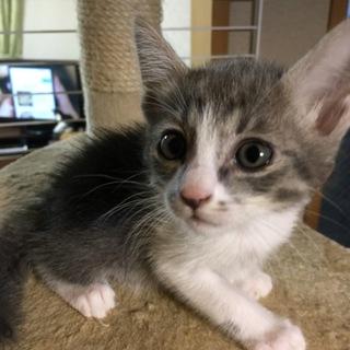 7月11日生まれのカワイイ子猫です