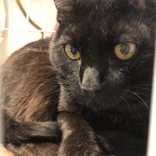 黒猫マキアくん♂おっとり系
