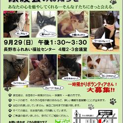 こちら肉球クラブ主催の猫の譲渡会