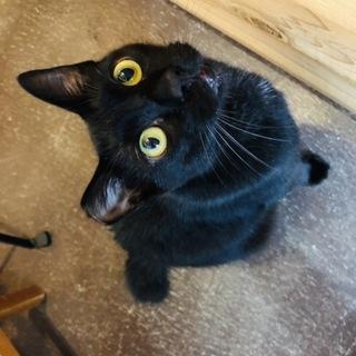 ツンデレイケメンの黒猫☆しゅわくん