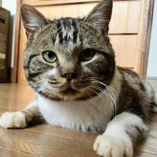 【健太郎】MIX・推定1〜2歳・オス