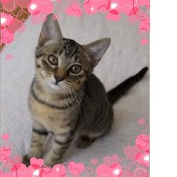 8月31日(土) 葛尾動物見守り隊 主催 保護猫譲渡会を開催します!