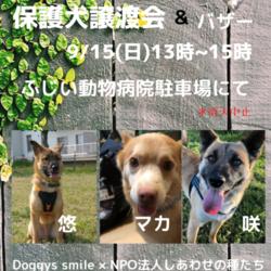 中型雑種保護犬譲渡会
