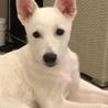 山口県出身のさくら は2019.1.26生まれです。穏やかな性格の優しいいい子です