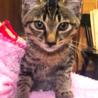 相模大野駅前北口デッキ♪猫の譲渡会♪