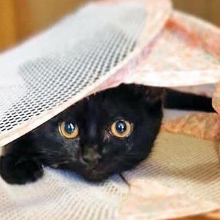 黒ネコのタンゴちゃん【動画】    一時募集停止