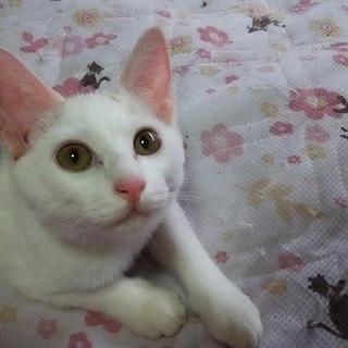 母猫交通事故死子猫達のお家家族里親様募集致します